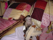 Очаровательный мальчик и девочка капуцинов обезьяна